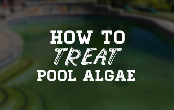 How To Treat Pool Algae