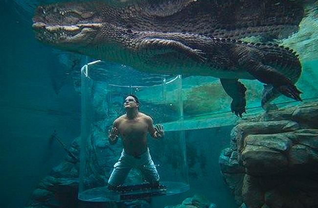 interesting-swimming-pools-33