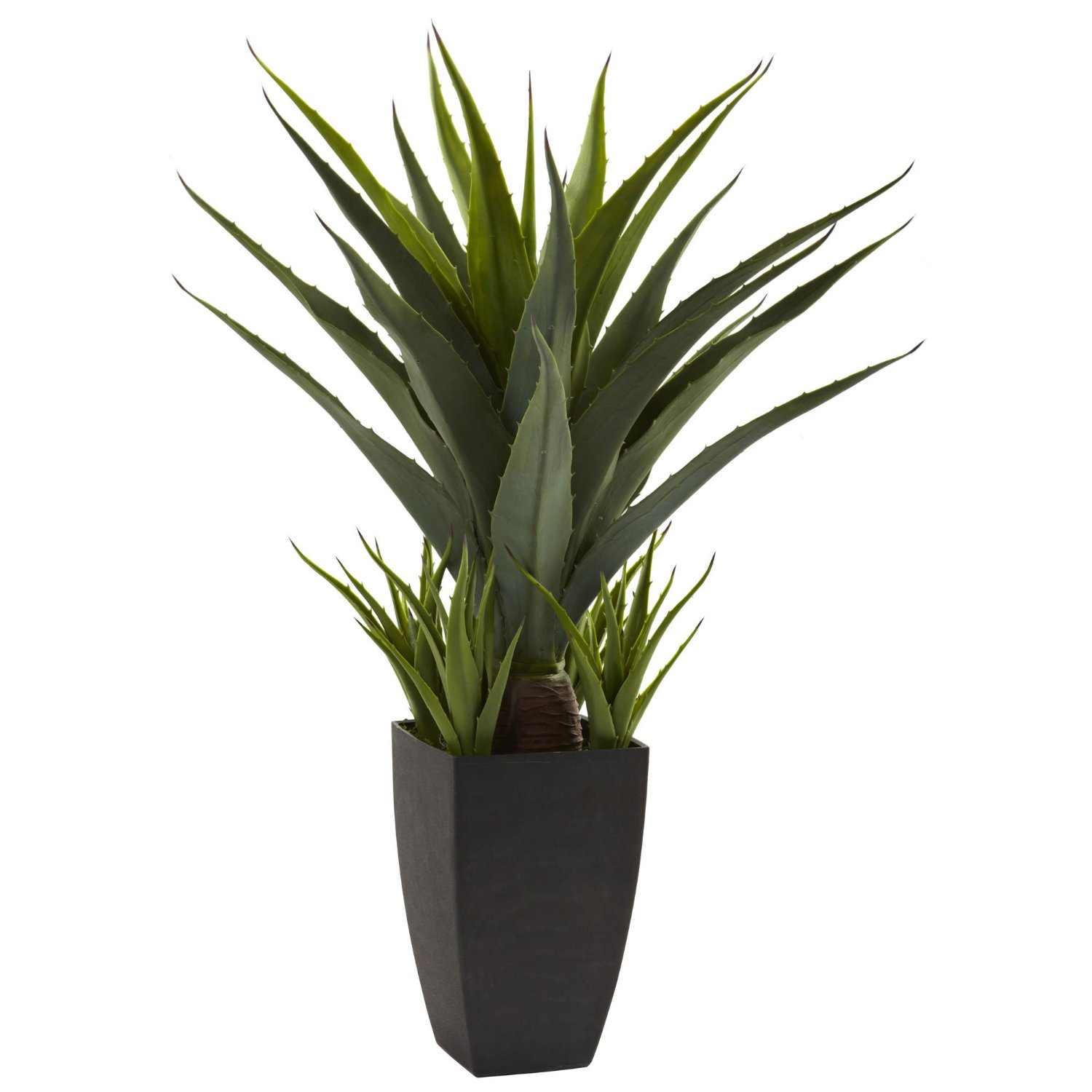 agave-planter