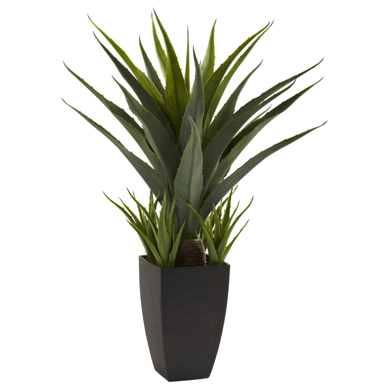 agave-planter