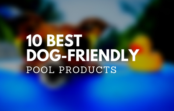 10 Best Dog-Friendly Pool Products